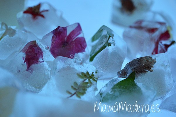¿Nos refrescamos con cubitos de hielo? 15