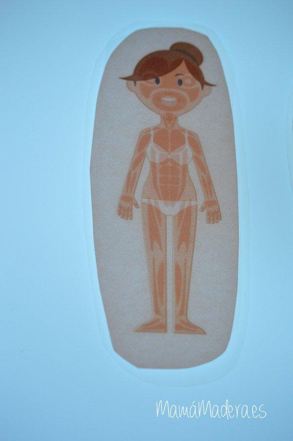 El cuerpo humano en la caja de luz 29