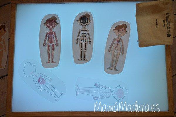El cuerpo humano en la caja de luz 12